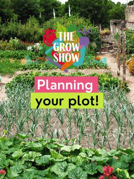 Planning your plot